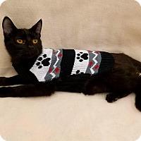 Adopt A Pet :: Prada - Northfield, OH