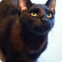 Adopt A Pet :: Clarissa - Aiken, SC