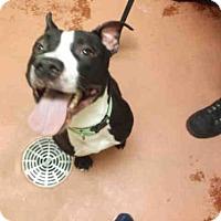 Adopt A Pet :: ZANE - Rockford, IL