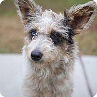 Adopt A Pet :: Betty - Rocky Hill, CT