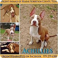 Adopt A Pet :: Achillies - Hearne, TX