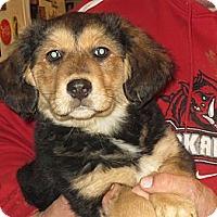 Adopt A Pet :: Ida-HELP - Salem, NH