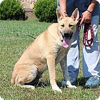 Adopt A Pet :: NicolasFee reduced to $200 - Hagerstown, MD