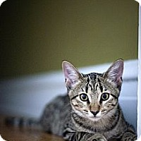 Adopt A Pet :: Hattie - Chicago, IL