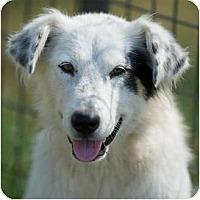 Adopt A Pet :: Augustina - Providence, RI
