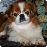 Adopt A Pet :: Niles - Virginia Beach, VA