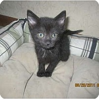 Adopt A Pet :: Weezy (hand raised) - Sterling Hgts, MI