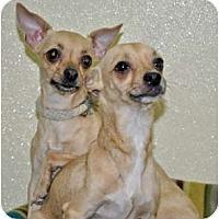 Adopt A Pet :: Lola - Port Washington, NY