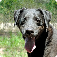 Adopt A Pet :: Blaze - Wichita, KS