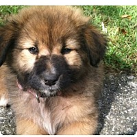 Adopt A Pet :: Beretta - Pending Adoption - Lancaster, PA