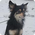 Adopt A Pet :: Limade
