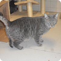Adopt A Pet :: Gabriel - white settlment, TX