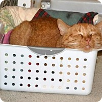 Adopt A Pet :: Acorn - Geneseo, IL