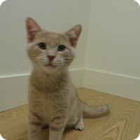 Adopt A Pet :: Garza - Milwaukee, WI