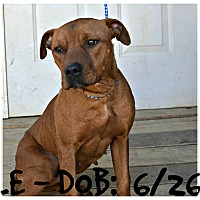 Pit Bull Terrier Mix Dog for adoption in Siler City, North Carolina - Hope