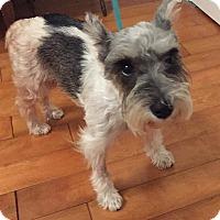 Adopt A Pet :: Esmeralda - Redondo Beach, CA