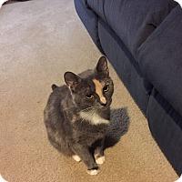 Adopt A Pet :: Jewels - Chesapeake, VA