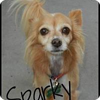 Adopt A Pet :: Sparky - Escondido, CA
