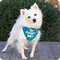 Adopt A Pet :: Biscuit - Pacific Grove, CA