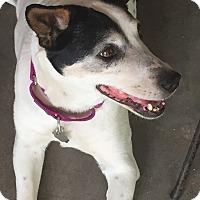 Adopt A Pet :: FIONA - Los Angeles, CA