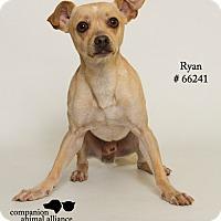 Adopt A Pet :: Ryan - Baton Rouge, LA