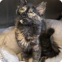 Adopt A Pet :: Audrey - Merrifield, VA