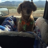 Adopt A Pet :: Cookie - Ogden, UT