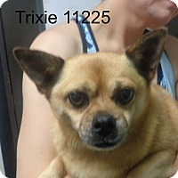 Adopt A Pet :: Trixie - baltimore, MD