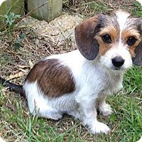 Adopt A Pet :: Keely (Daisy) - E. Greenwhich, RI