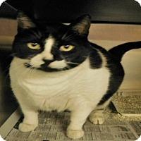 Adopt A Pet :: PRECIOUS - Ocala, FL