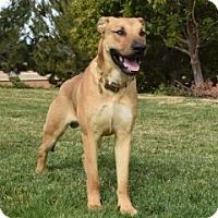 Adopt A Pet :: Norman - San Diego, CA