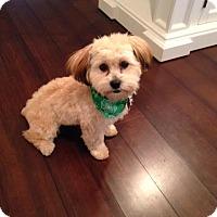 Adopt A Pet :: Sophia - Tenafly, NJ