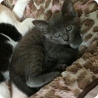 Adopt A Pet :: EOS (CL) - Alpharetta, GA