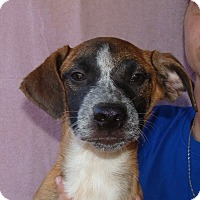 Adopt A Pet :: Sadie - Oviedo, FL