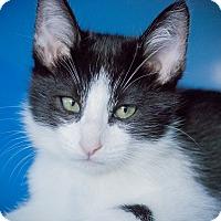 Adopt A Pet :: Troubadour - Los Angeles, CA