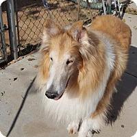 Adopt A Pet :: Tucker - Santa Barbara, CA