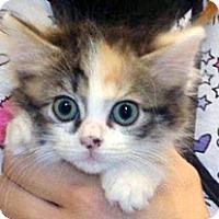 Adopt A Pet :: 328661 - Wildomar, CA