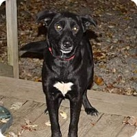 Adopt A Pet :: Mollie - Homer, NY