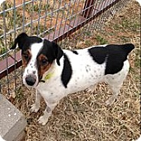 Adopt A Pet :: Lenny in Midland - San Antonio, TX