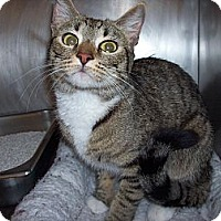 Adopt A Pet :: Makayla - El Cajon, CA