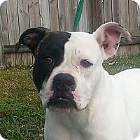 Adopt A Pet :: Lúa - Miami, FL