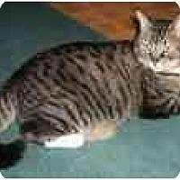 Adopt A Pet :: Freddie (Sweet Girl!) - Portland, OR