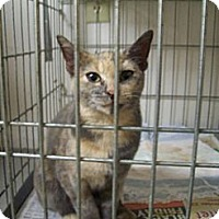 Adopt A Pet :: Lady Di - Walnut, IA