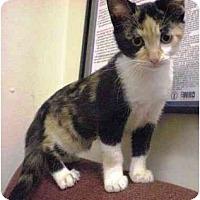 Adopt A Pet :: Fergie - Irvine, CA
