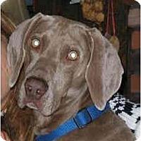 Adopt A Pet :: Casper - Attica, NY