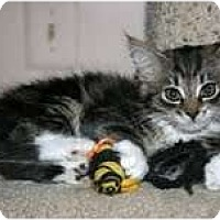 Adopt A Pet :: Jolene - Arlington, VA