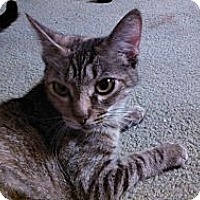 Adopt A Pet :: Danica - Williamsport, PA