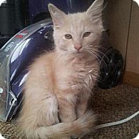 Adopt A Pet :: Olaf - Harrisonburg, VA