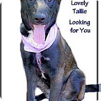 Adopt A Pet :: Tallie adoption pending - Sacramento, CA