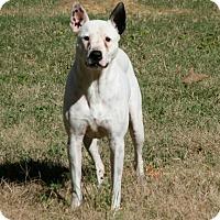 Adopt A Pet :: Stella - Lufkin, TX